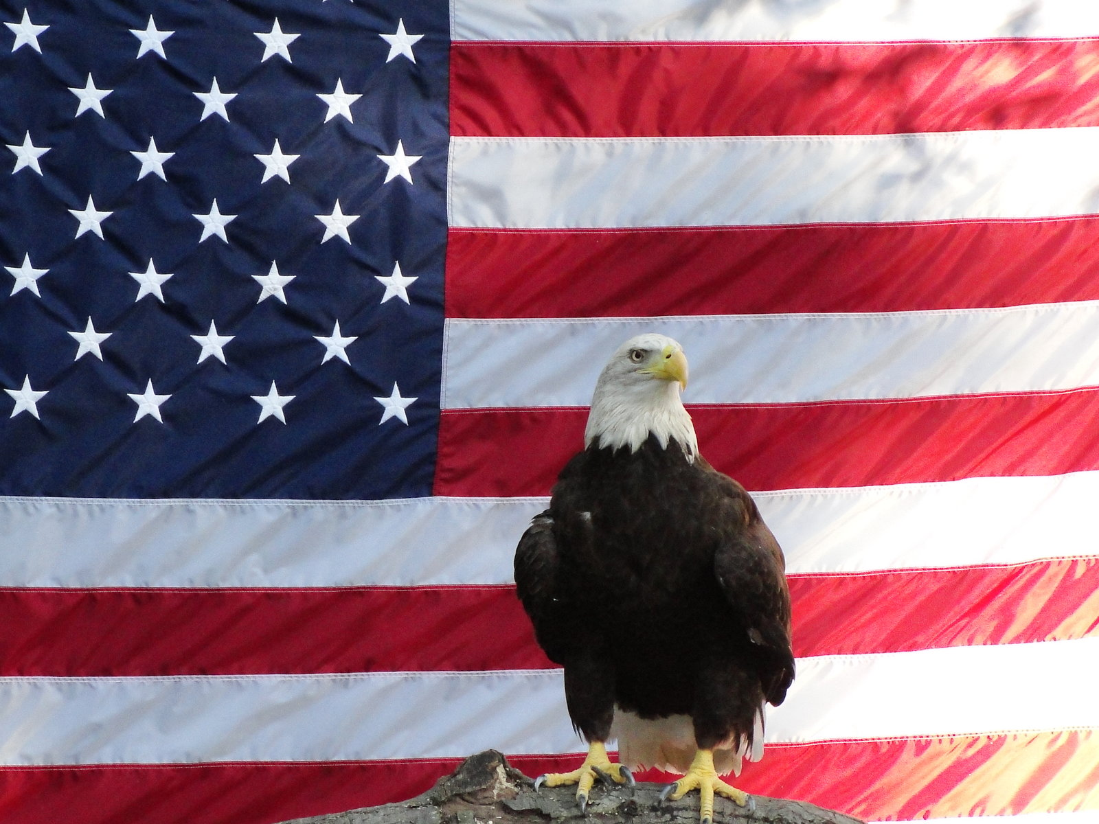Patriotic Wallpaper Usa Flag Eagle: Eagle And Flag Wallpaper