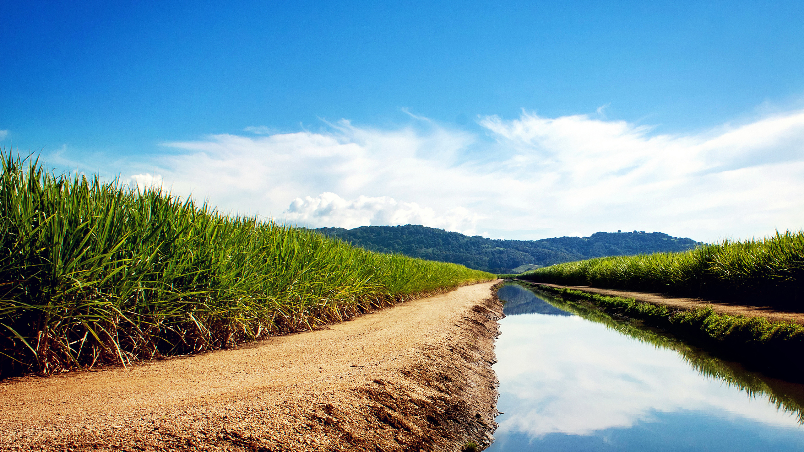 Sugarcane Fields Wallpapers HD Wallpapers 2560x1440