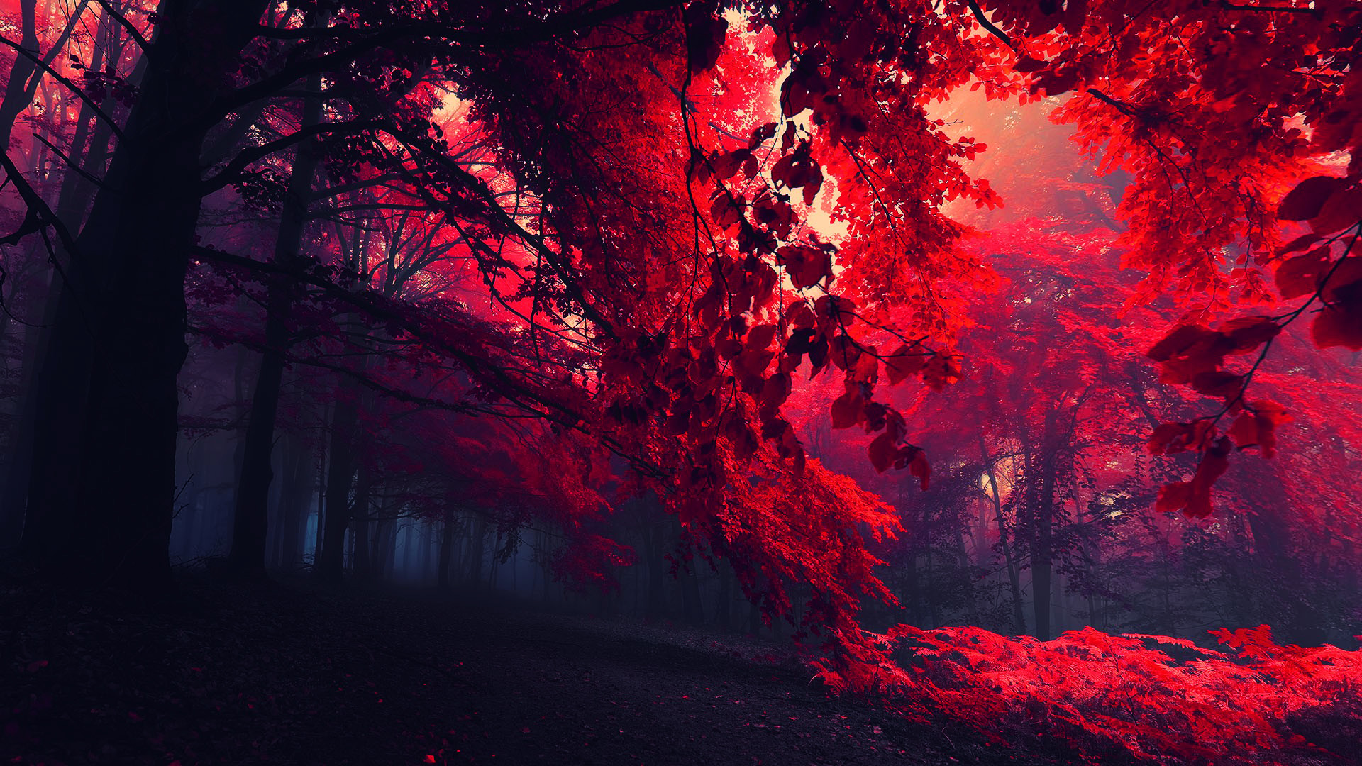 Dark red wallpaper hd wallpapersafari - Decorative trees with red leaves amazing contrasts ...