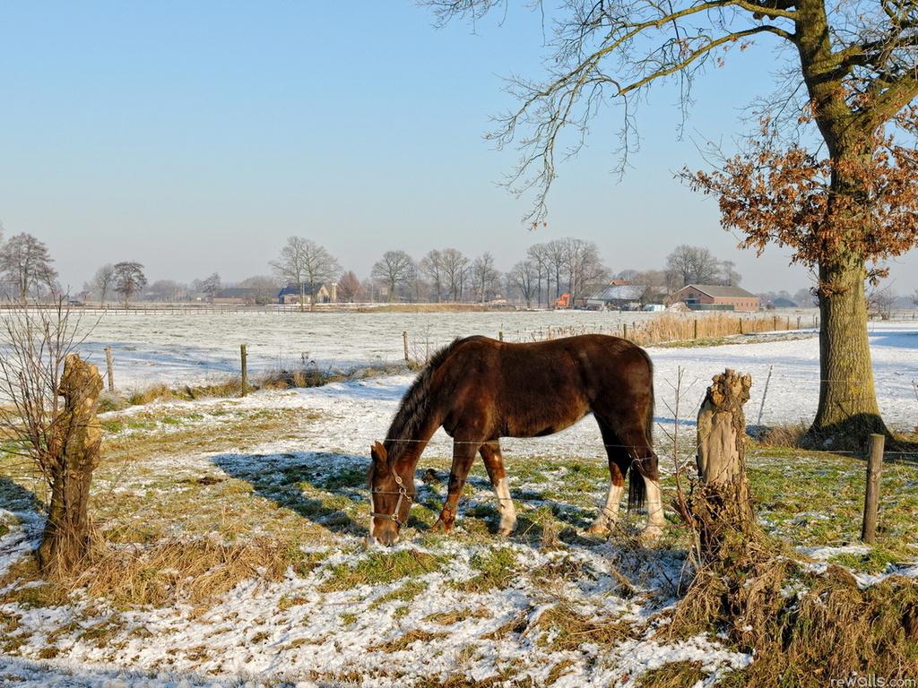 Horse in early winter wallpaper   ForWallpapercom 1024x768
