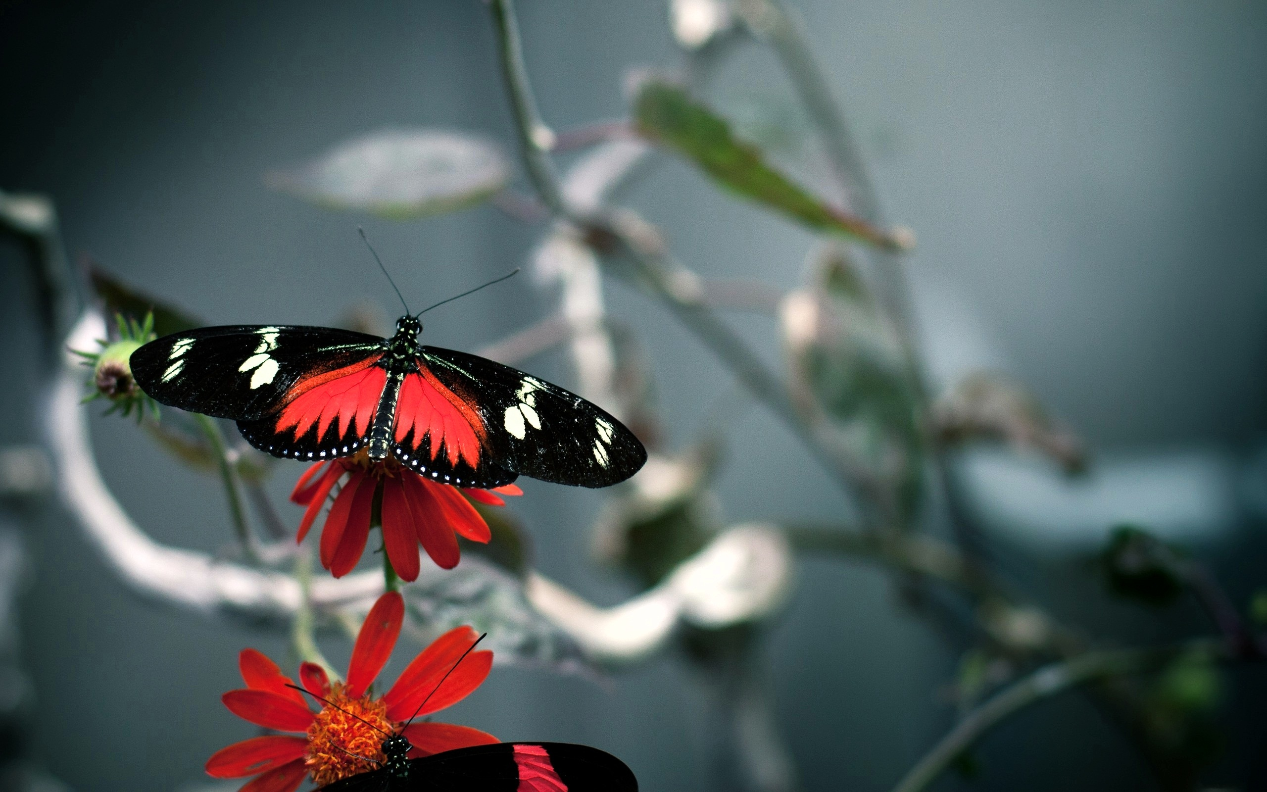 1600 879 kB jpeg HD desktop 3d butterfly wallpaper for Notebook 2560x1600