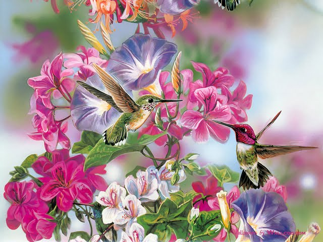 Lovely Hummingbird Paintings   Exquisite Birds and Flowers Wallpaper 640x480