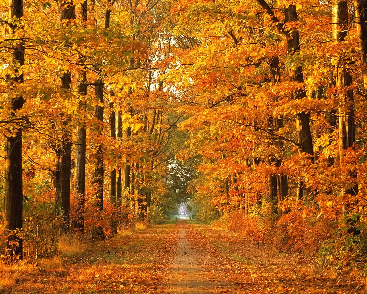 autumn wallpaper widescreen autumn forest wallpaper autumn wallpaper 1280x1024