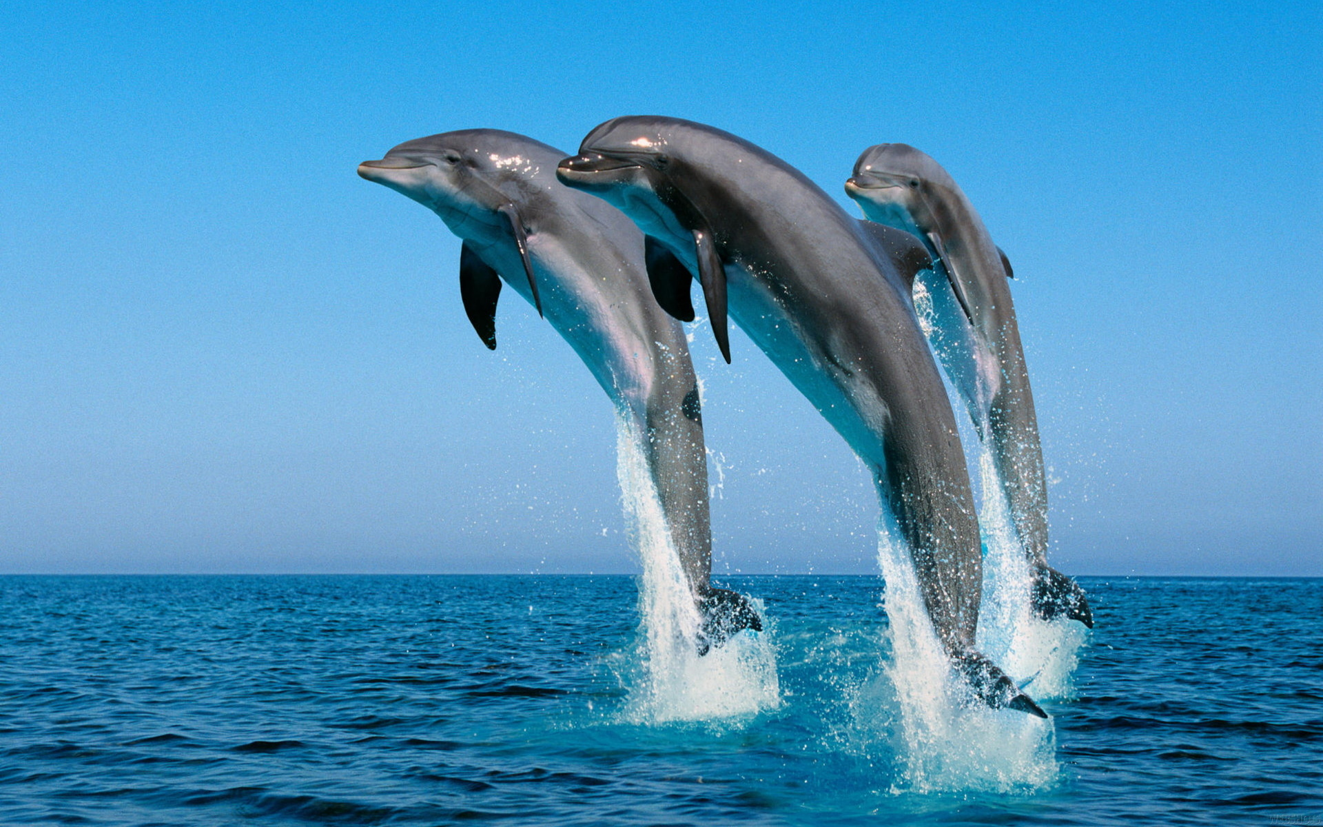 Dolphin Wallpapers HD Pictures 1920x1200