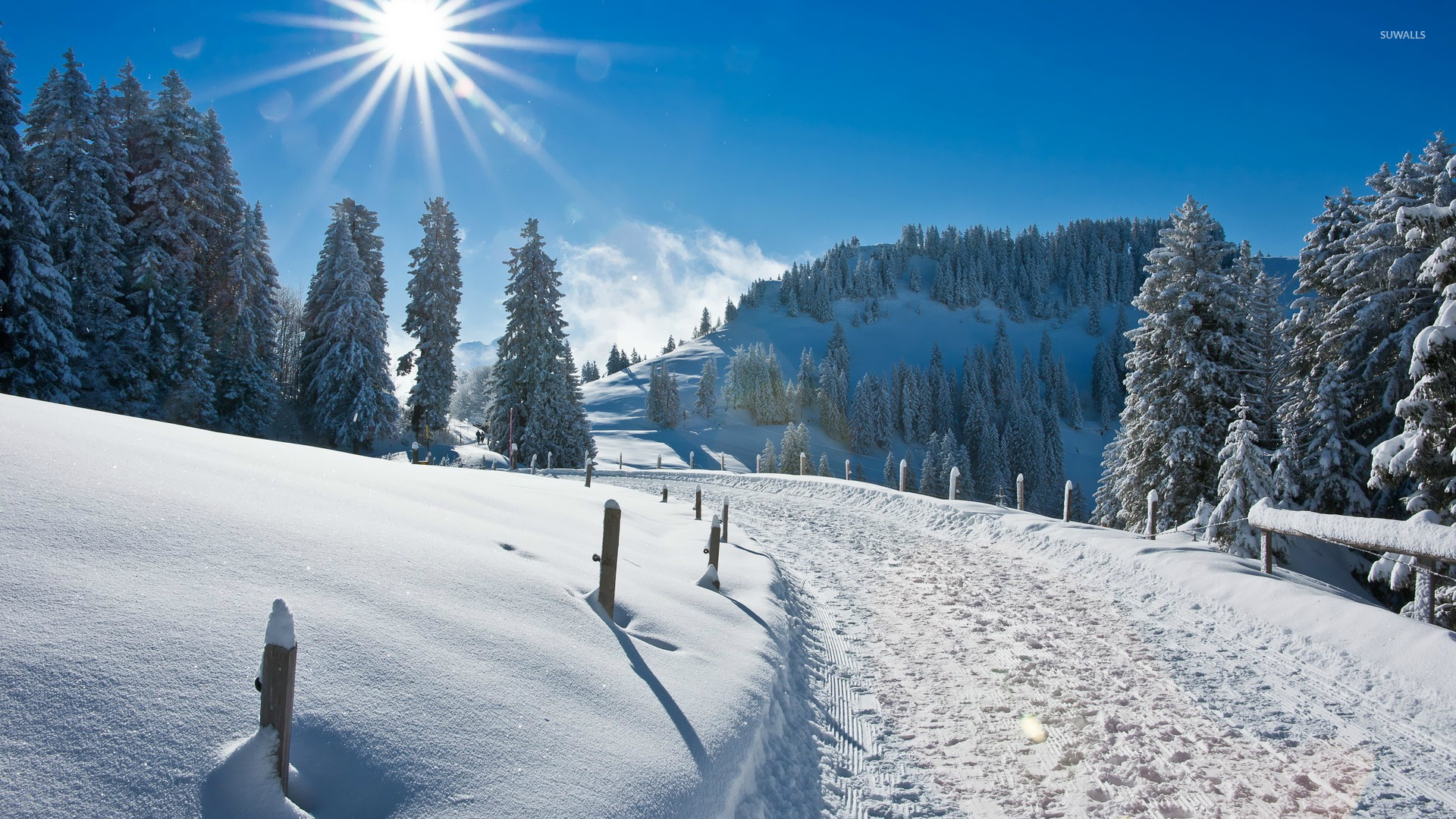 Sunny winter wallpaper   Nature wallpapers   16472 1680x1050