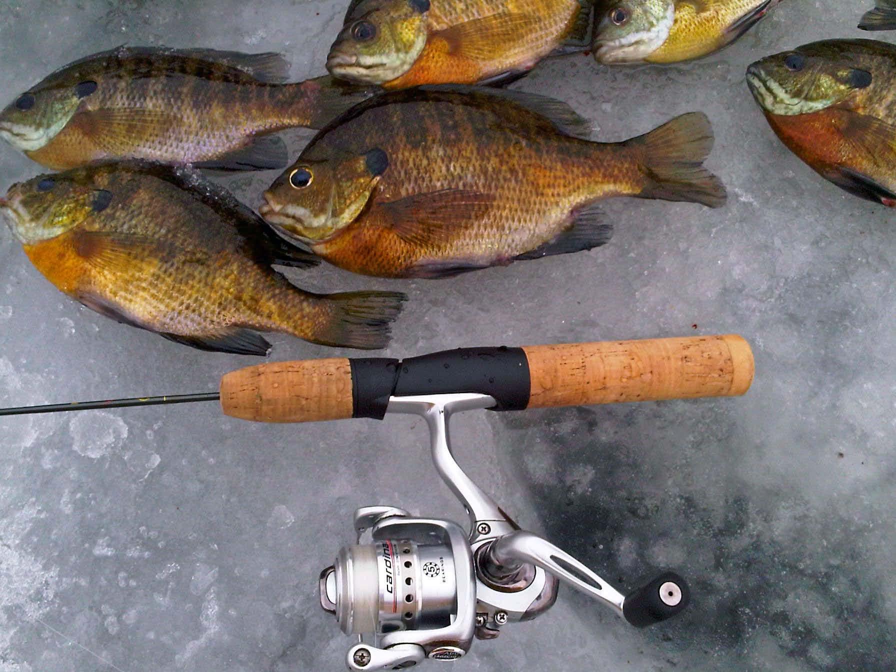Фиш рыбалка