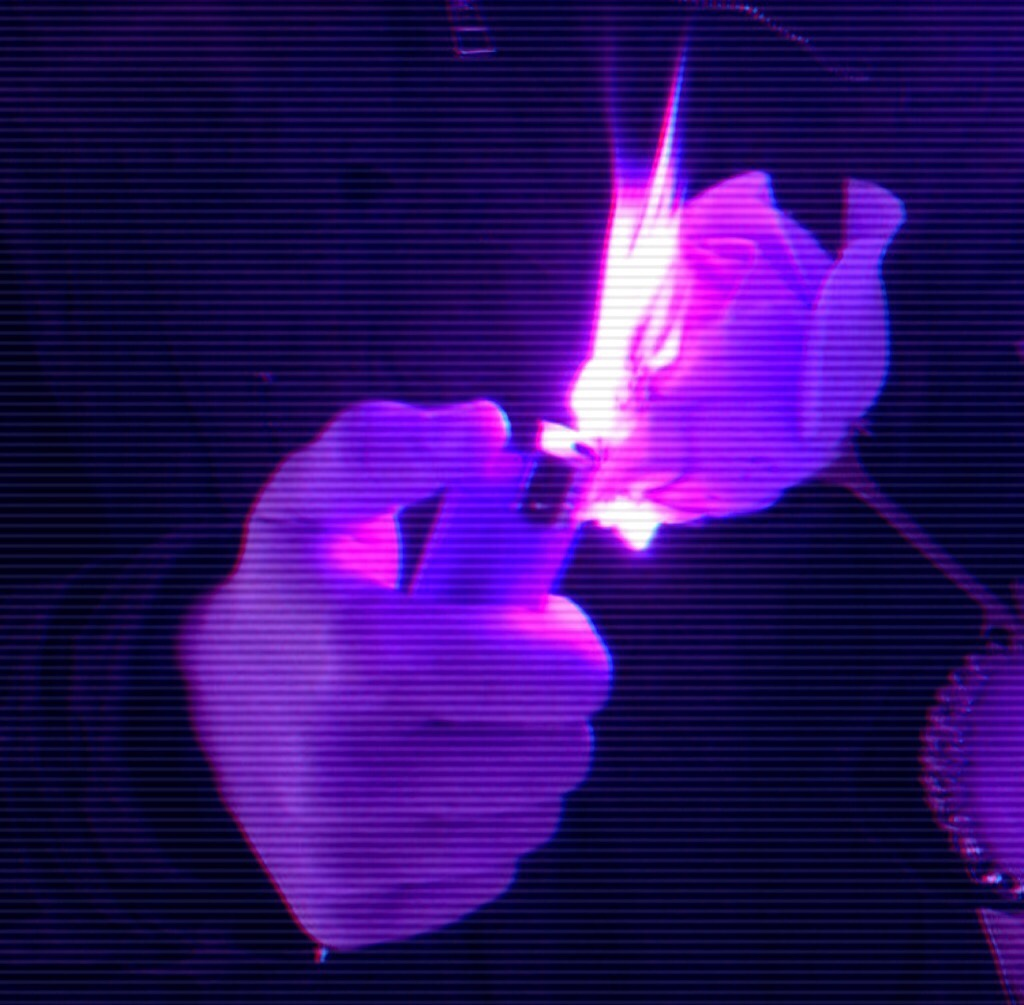 purple asthetic background tumblr purplebackground purp 1024x1005