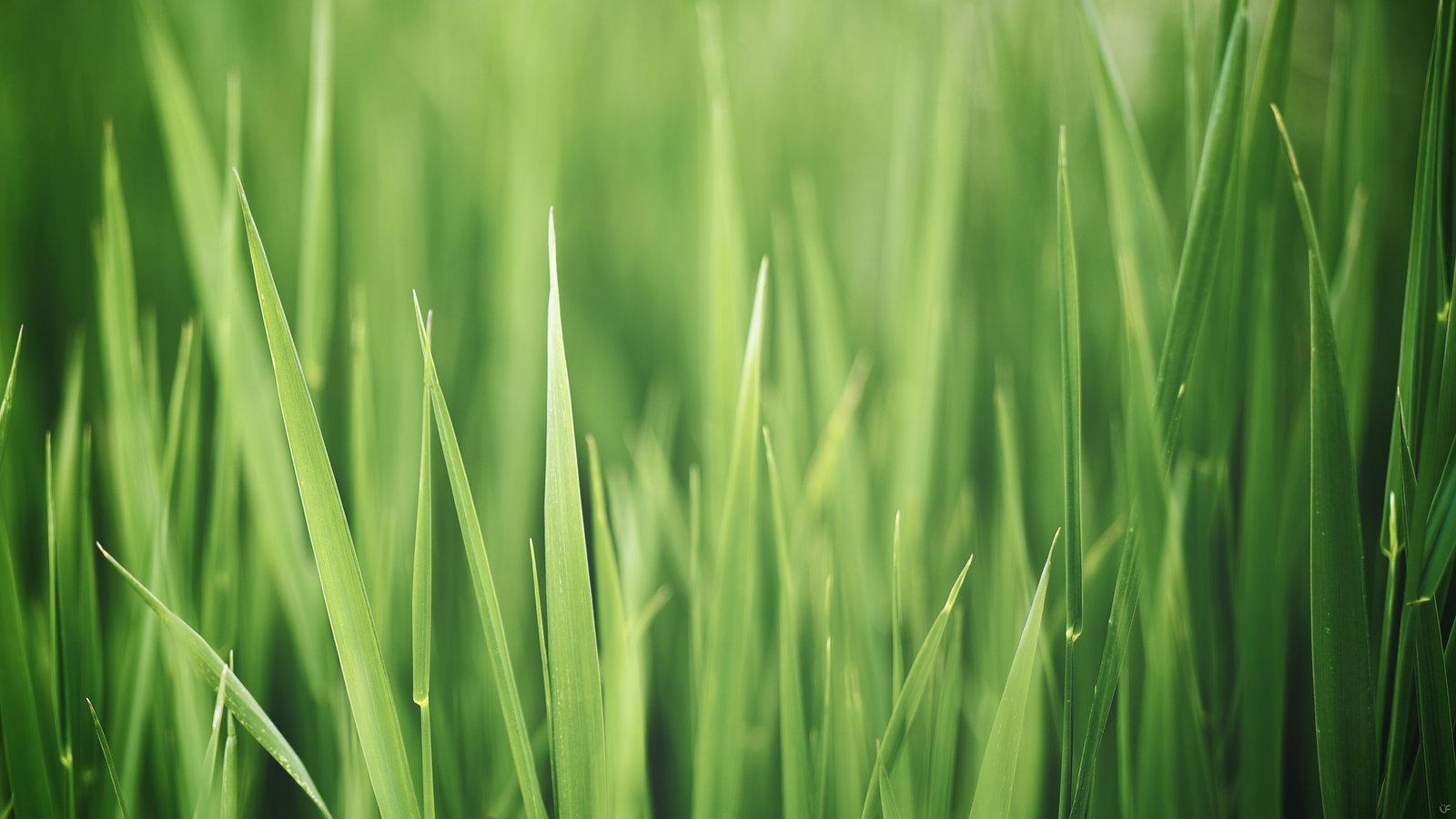 Apple Grass Ipad Wallpaper 1600x900