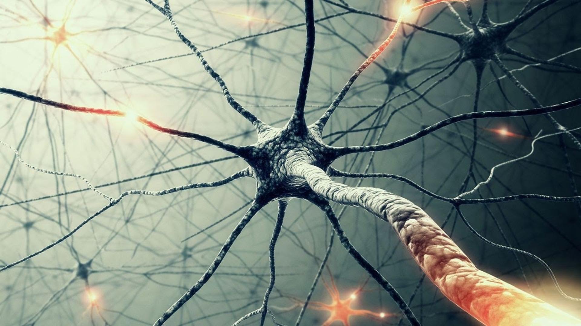 Biology microscopic cells neurons background wallpaper 70373 1920x1080