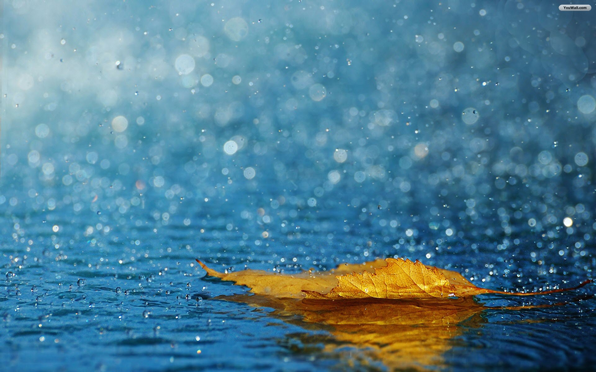 Leaf Rain Wallpaper HD wallpaper   Leaf Rain Wallpaper 1920x1200
