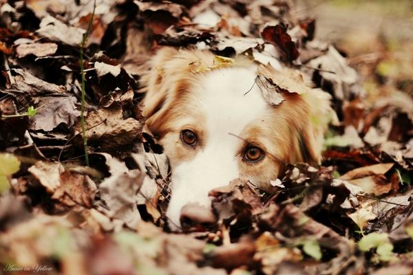 dogsanimalsautumnleavesdepth of fieldPets autumn animals leaves 600x400