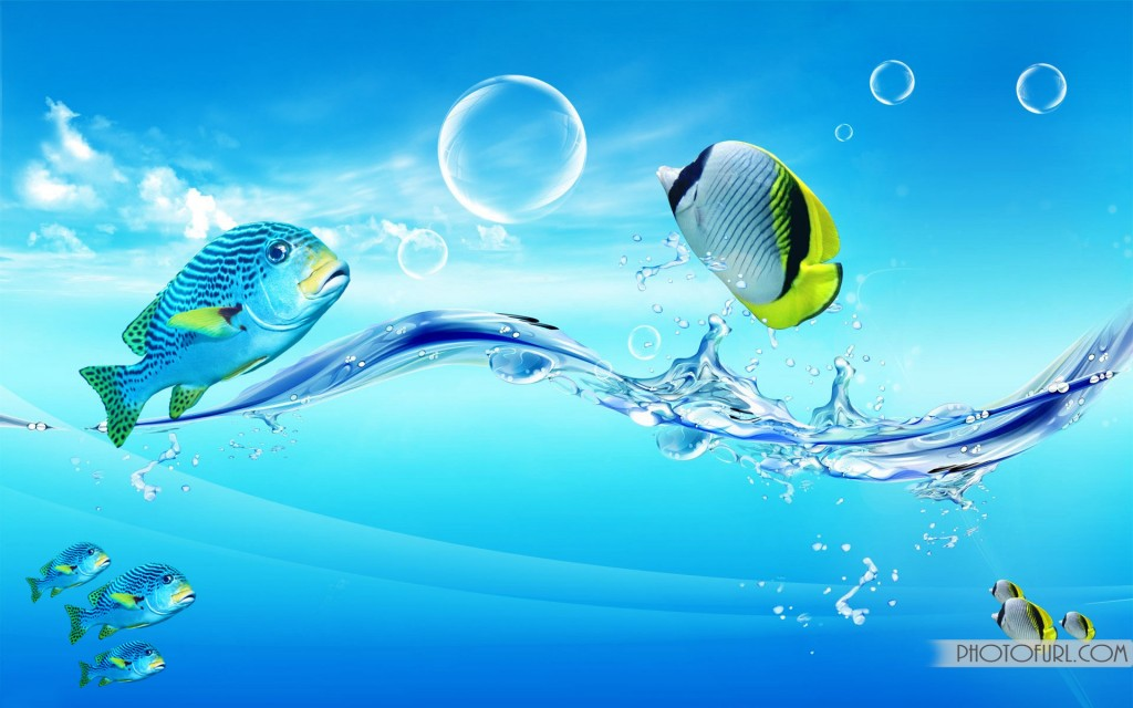 fish wallpapers best - photo #18