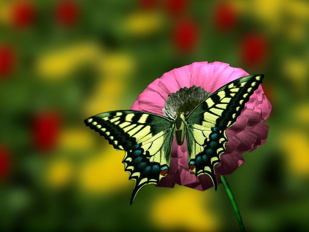 Фото цветы в 3д