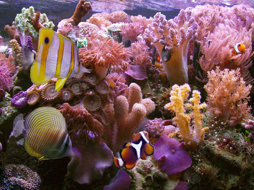 coral reef wallpaper widescreen Sea and Sunset 1024x768