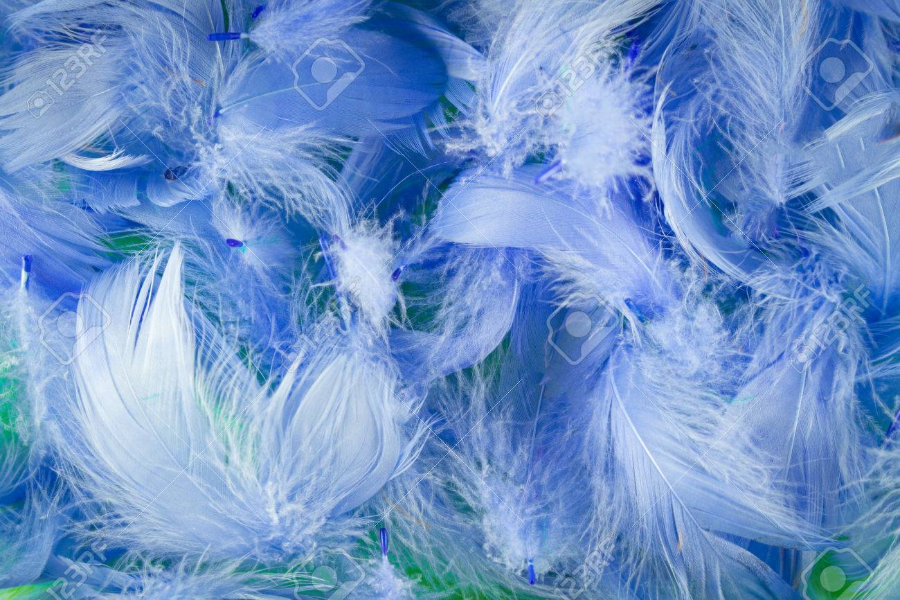 Blue Full Frame Softness Texture Feathers Wallpaper Stock Photo 1300x866