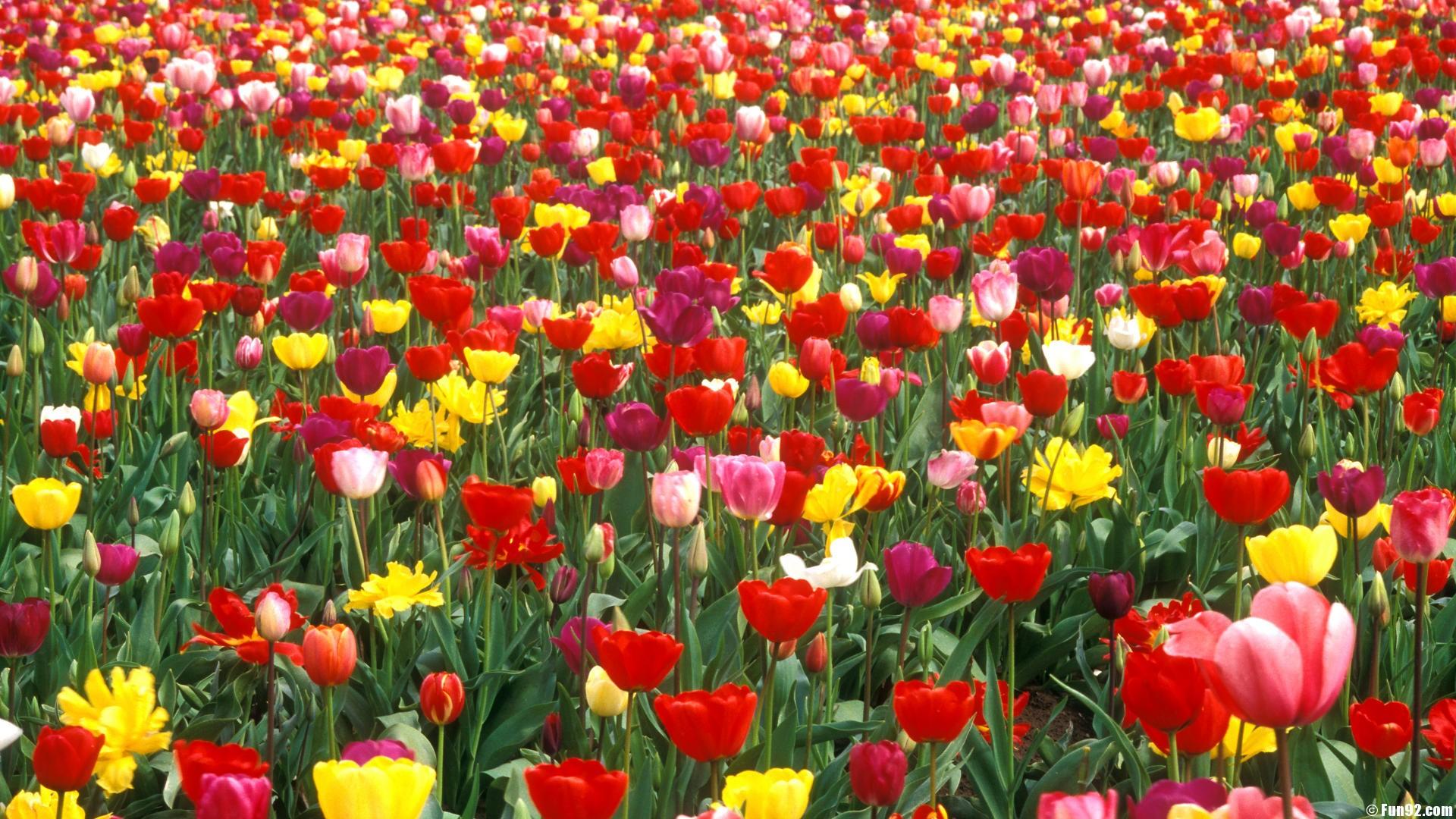 Flower Garden Wallpaper Background