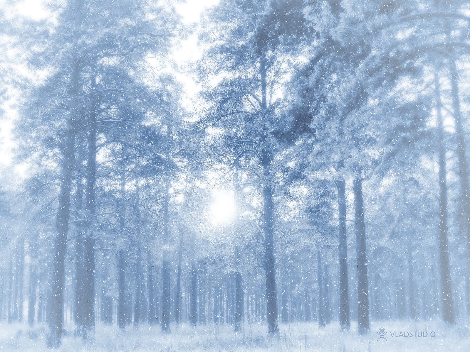 1600x1200 Winter forest desktop PC and Mac wallpaper 1600x1200