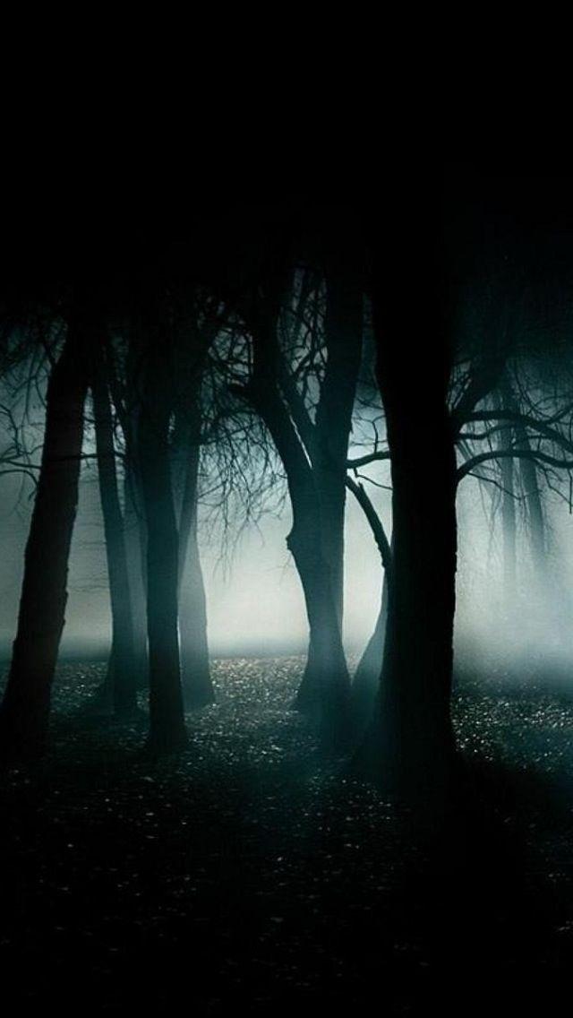 search best dark forest iphone wallpaper tags best dark forest trees 640x1136