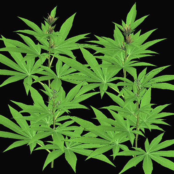 animated marijuana wallpaper wallpapersafari