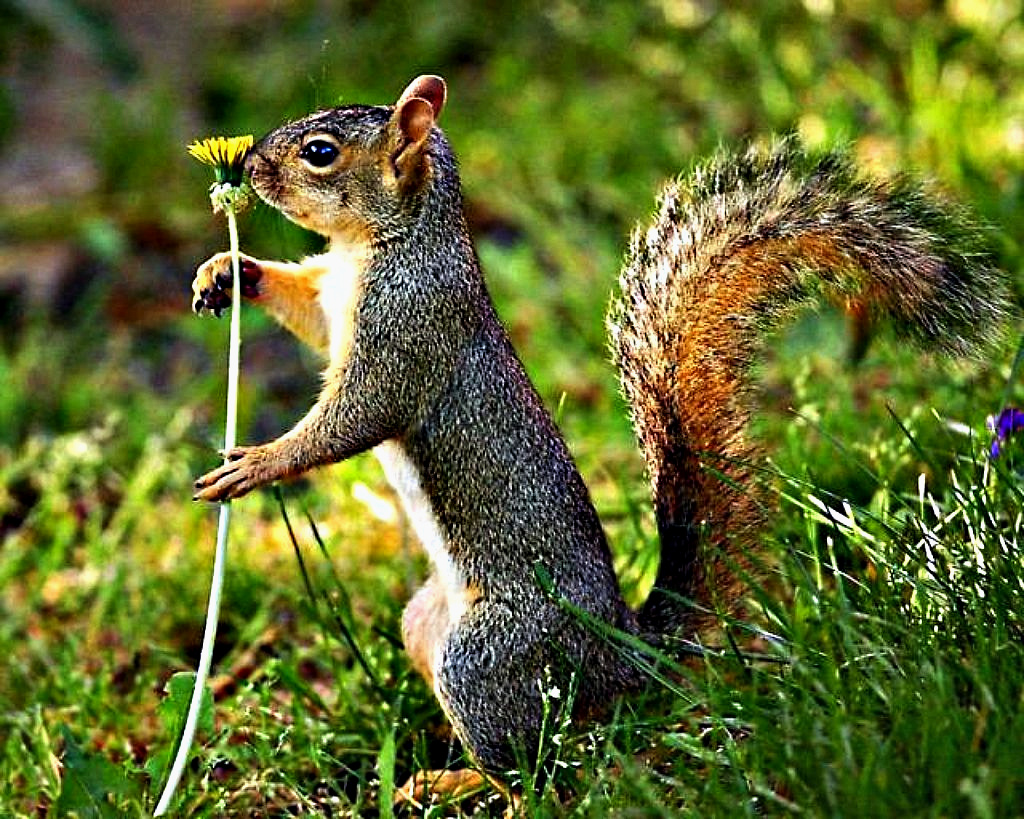 Squirrel coupons