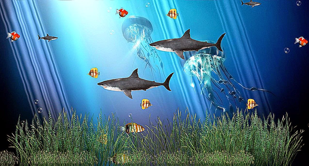Fish aquarium live wallpaper - Aquarium Wallpapers For Windows 8 Wallpapersafari
