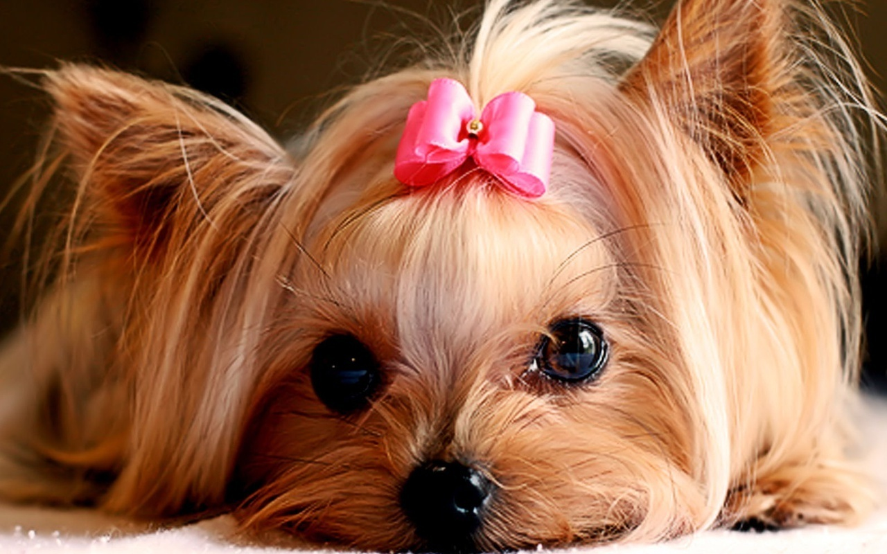 Cute Puppies   Puppies Wallpaper 22040893 1280x800