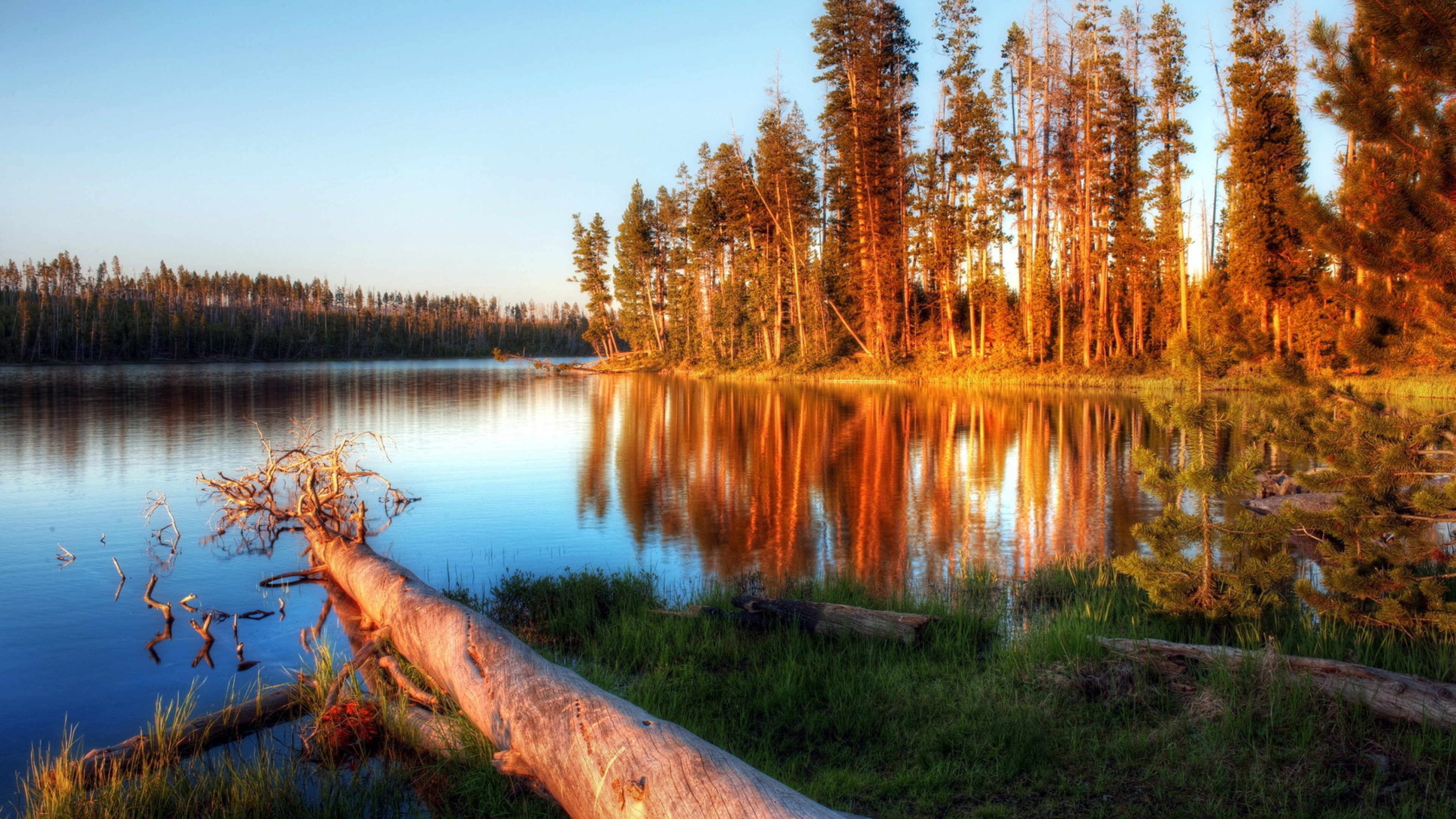 Lake Evening Trees Log Water Light Wallpaper Background 4K Ultra 3840x2160