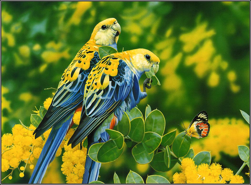 Wallpapers 2013 Beautiful And Dangerous AnimalsBirds Hd Wallpapers 1054x775