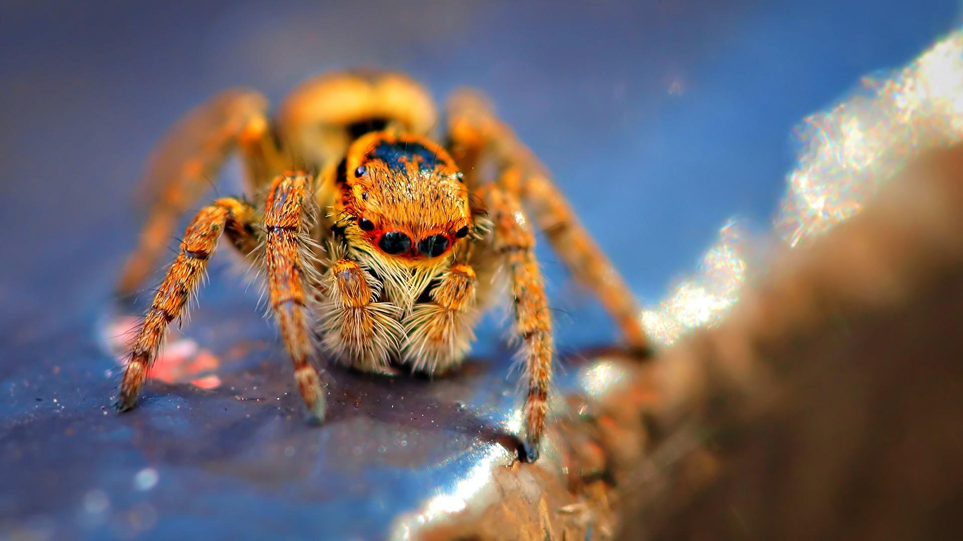 Macro photography spider 1920x1080