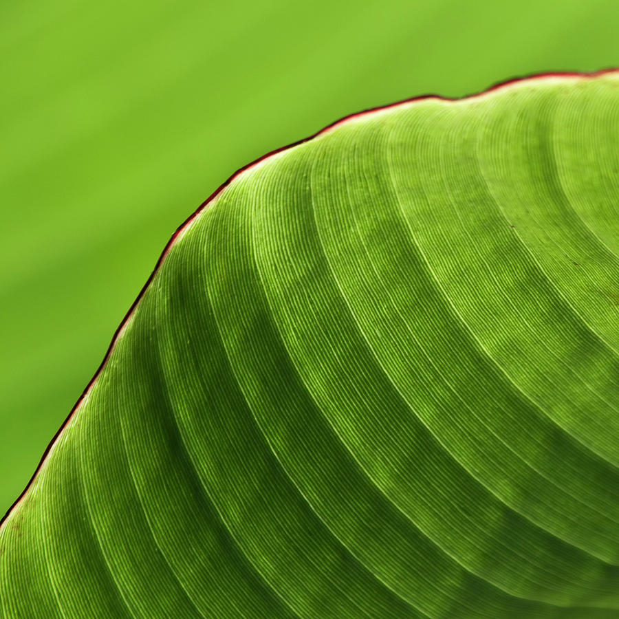 Top Banana Leaf Print Art Wallpapers 900x900