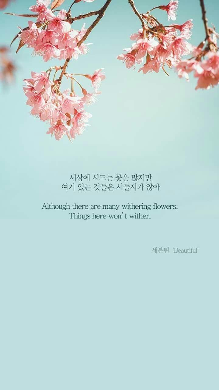 Svt   Seventeen Lyrics Quotes Kpop 1629979   HD Wallpaper Download 720x1280