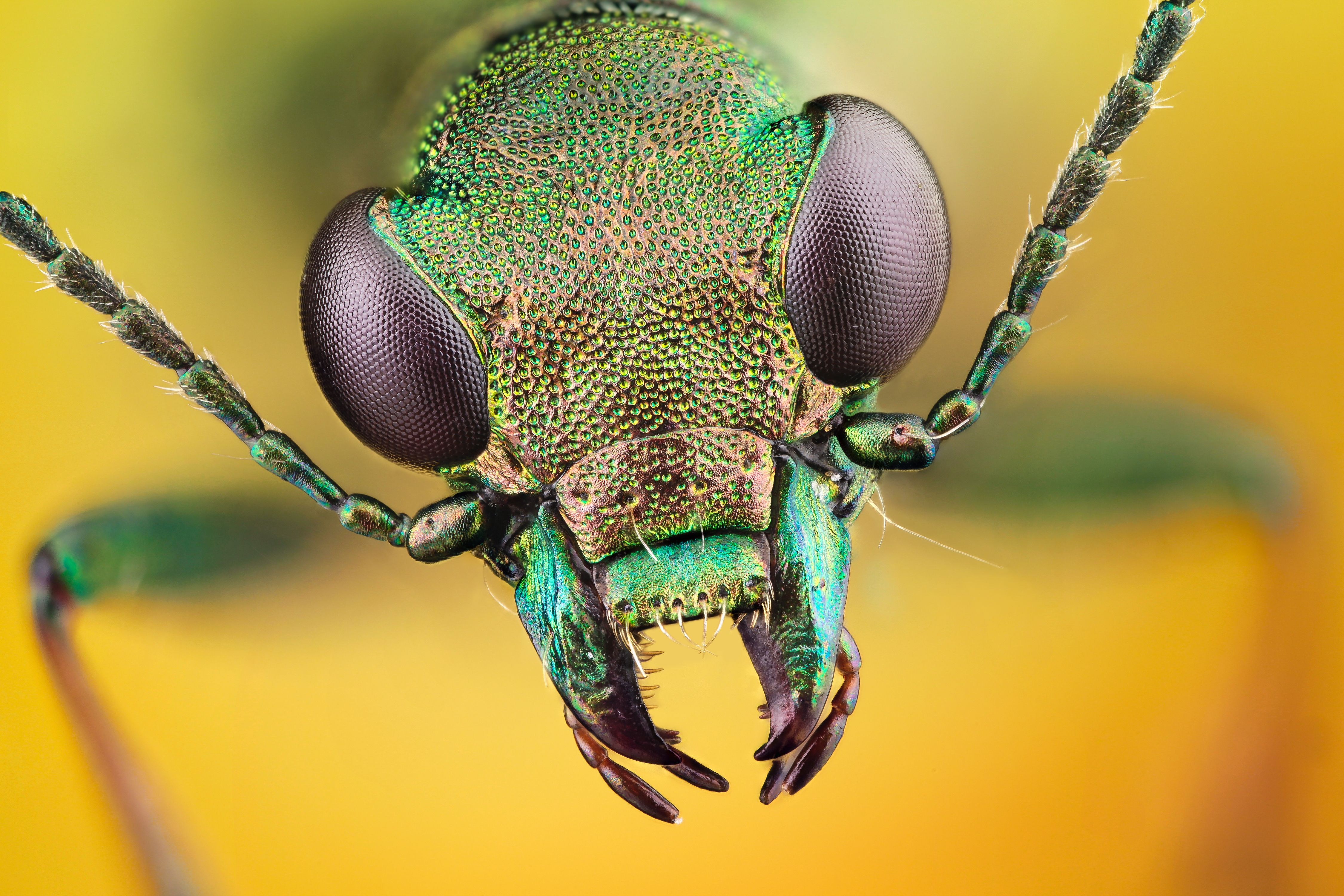 Insect Wallpapers   Top Insect Backgrounds   WallpaperAccess 4500x3000
