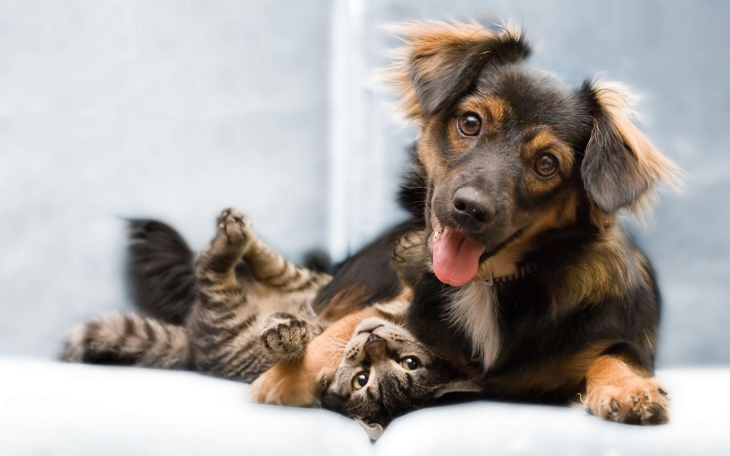 Cat And Dog Wallpapers 2560x1600