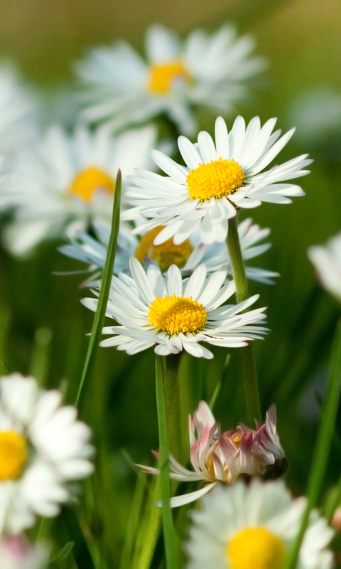 spring wallpaper android