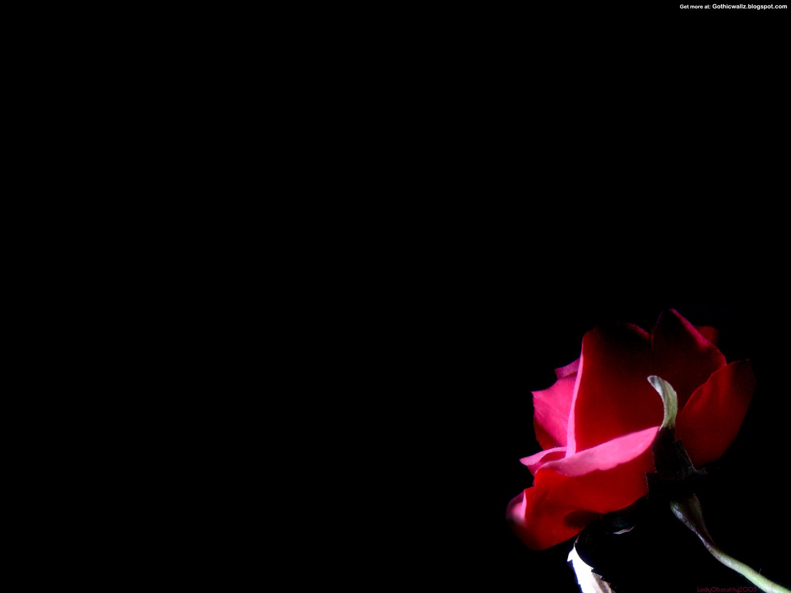 Gothic Rose 2   Dark Gothic Wallpapers   FREE Gothic Wallpaper   Dark 1600x1200