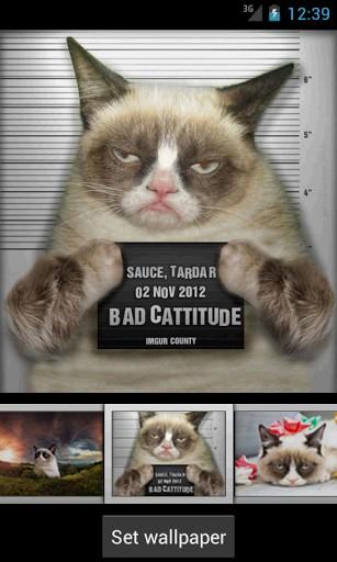 Go Back Pix For Grumpy Cat Iphone Wallpaper 307x512