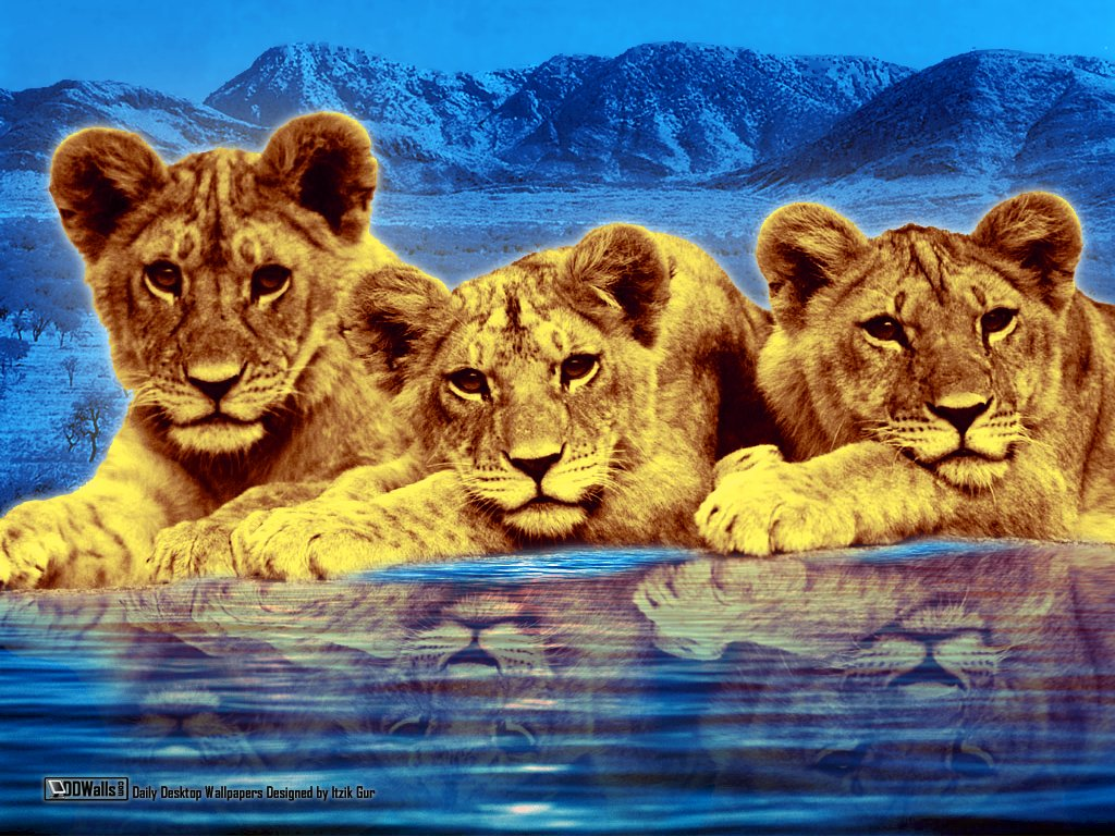 Lion cubs wallpapers Lion cubs background   Page 3 1024x768