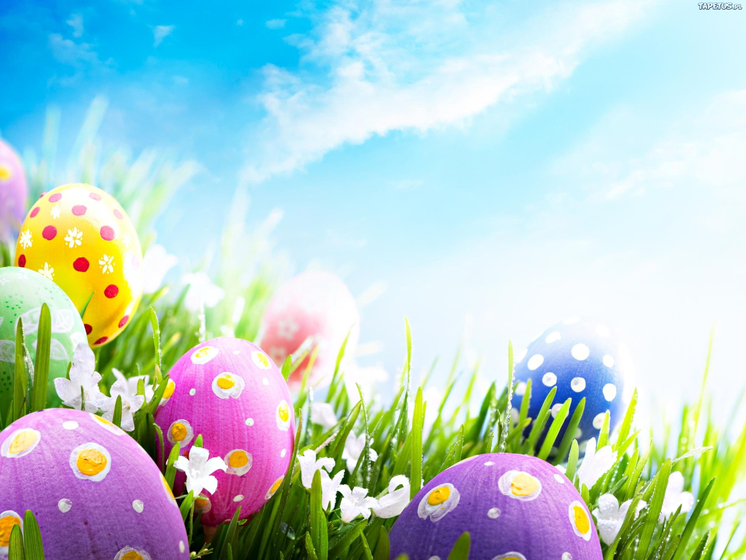 Easter Backgrounds download 2560x1920