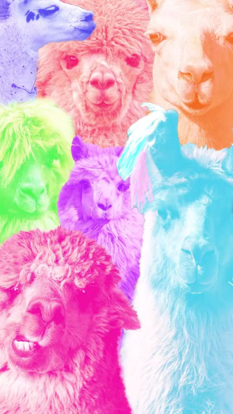 Llama background llamas in 2019 Cellphone wallpaper Future 750x1334