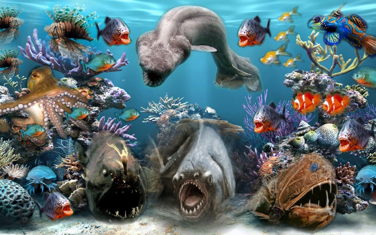 1280x800 Sea Creatures desktop PC and Mac wallpaper 1280x800