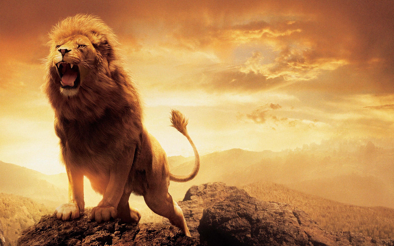 66 Narnia Aslan Wallpapers on WallpaperPlay 2880x1800