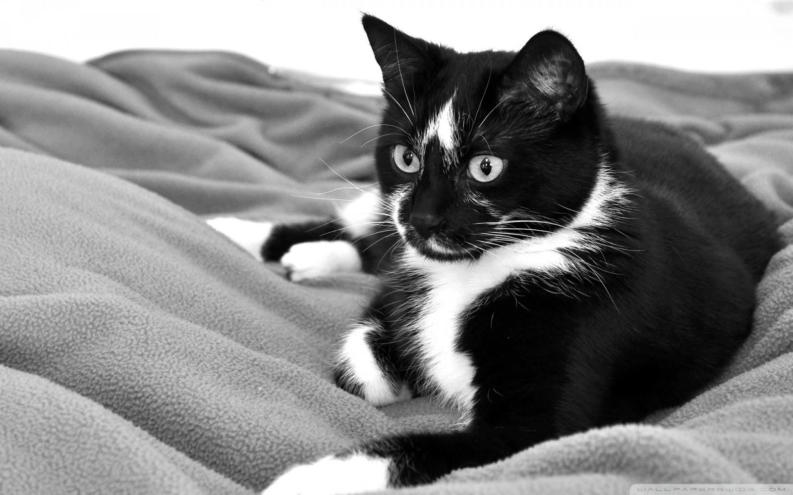 Cute Black Cat Wallpaper Wallpapersafari