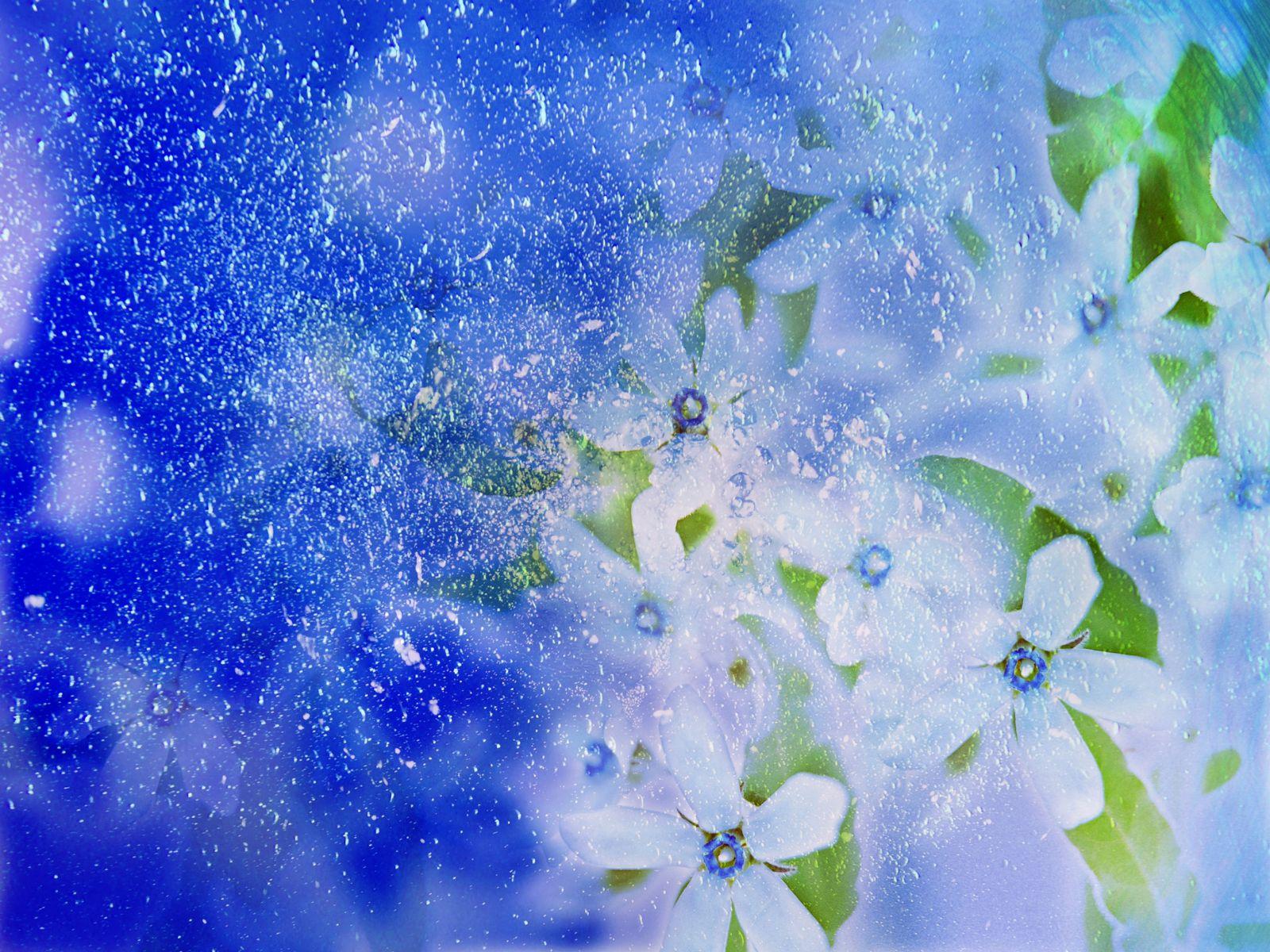 flower wallpaper flower wallpaper for desktop 3d flower wallpaper 1600x1200