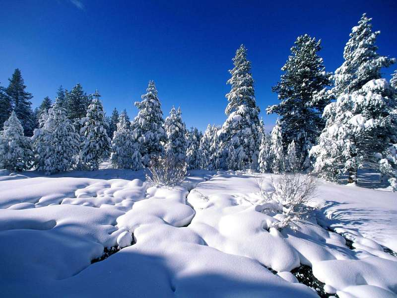 FREE HD NATURE WALLPAPERS Christmas Nature Wallpaper 800x600