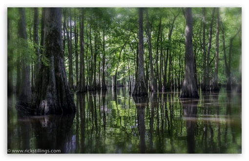 Swamp wallpaper 510x330
