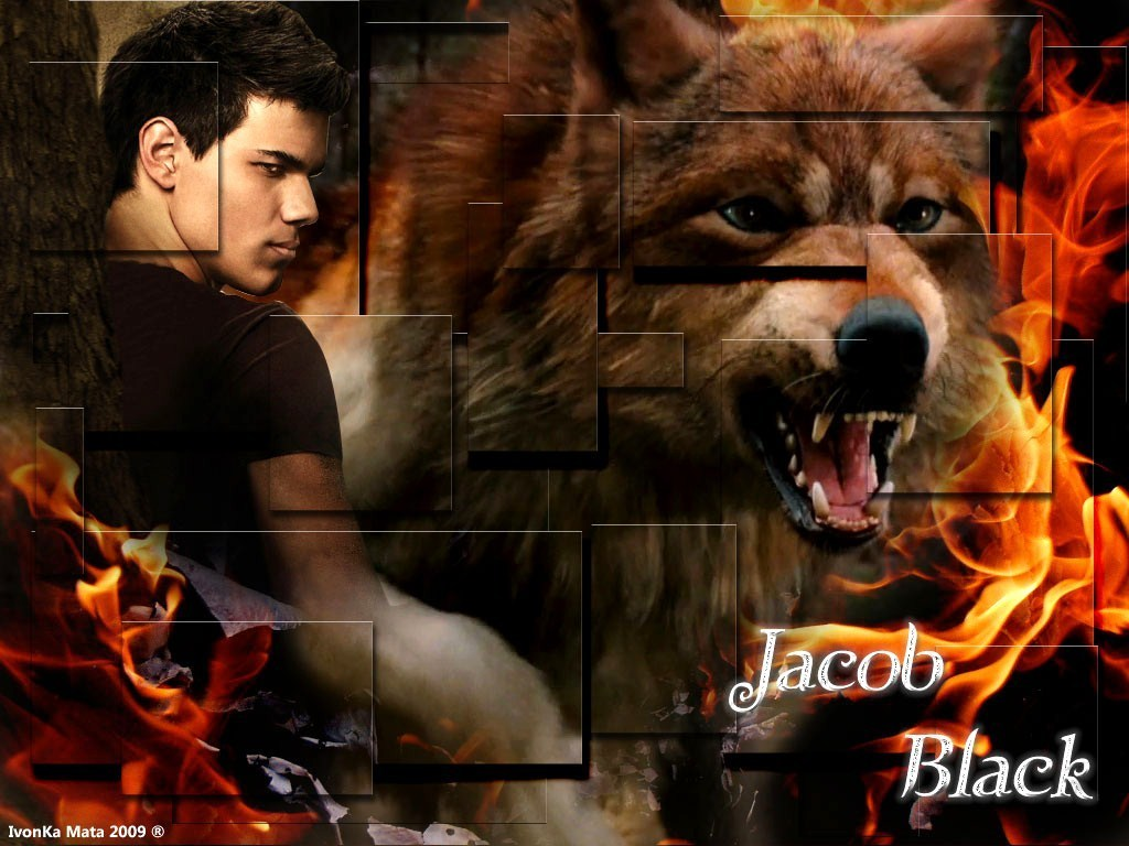download Twilight Series images Jacob Black HD wallpaper and 1024x768