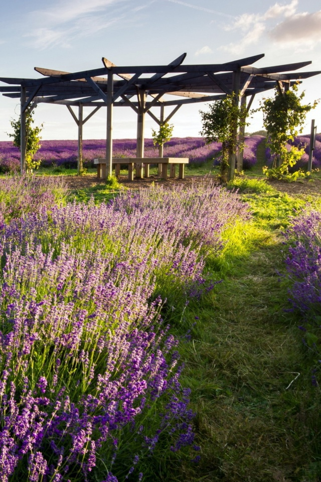 Provence Lavender Mobile Wallpaper   Mobiles Wall 640x960