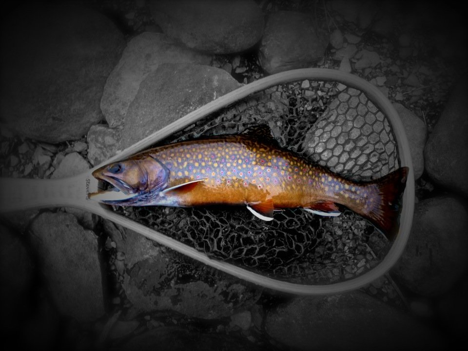 trout fly fishing wallpaper - photo #32