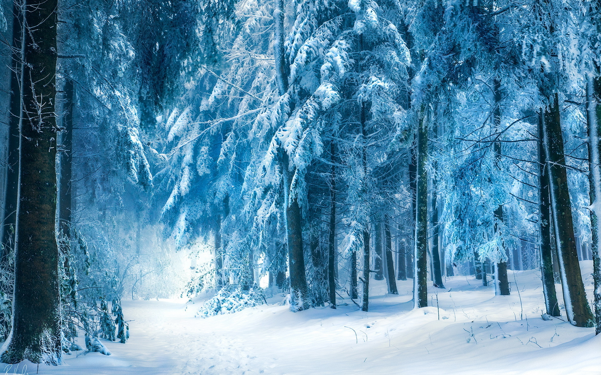 Winter Background Wallpapers WIN10 THEMES 1920x1200