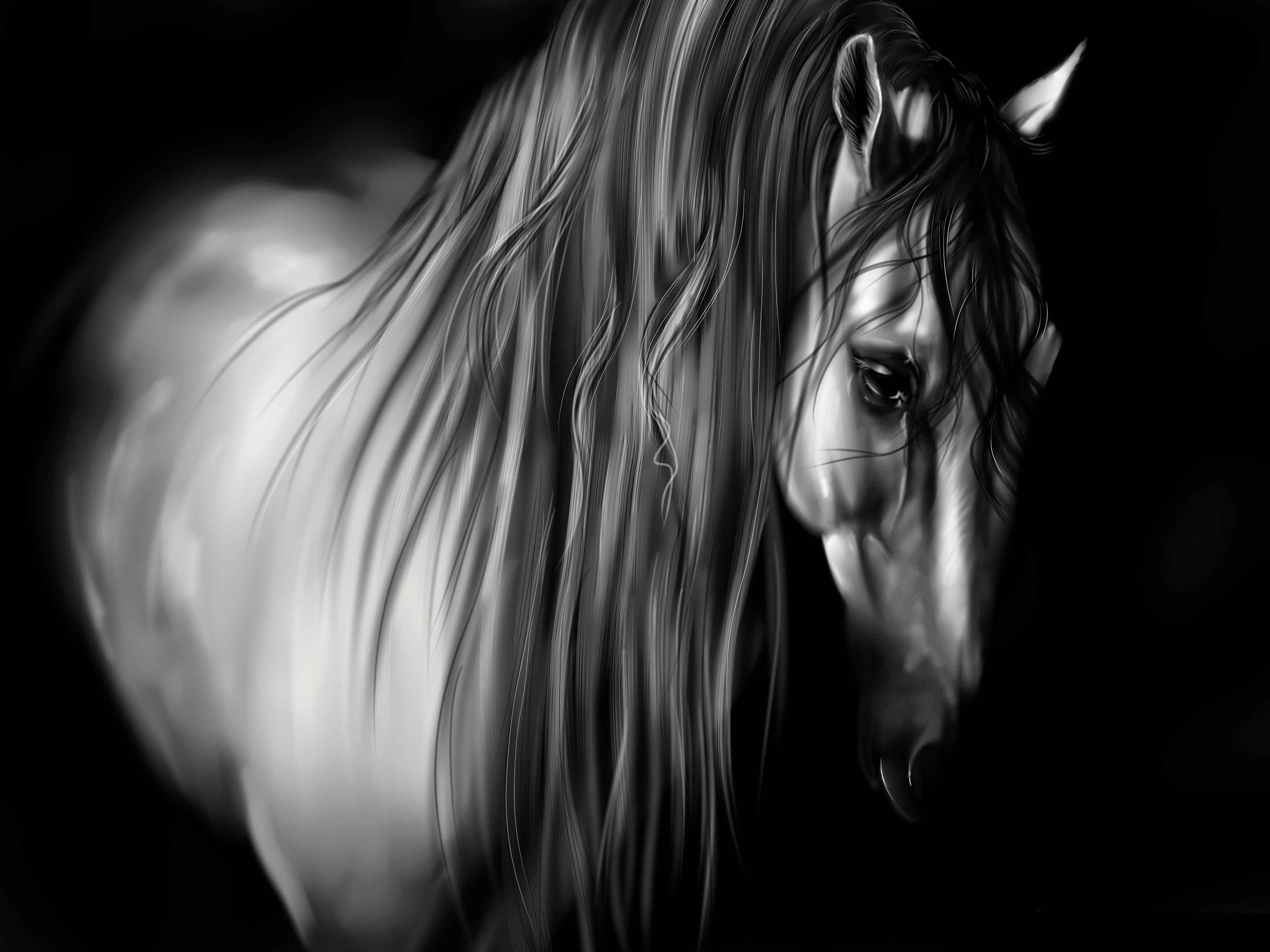 Animal horse mane black and white black background wallpapers 3500x2625